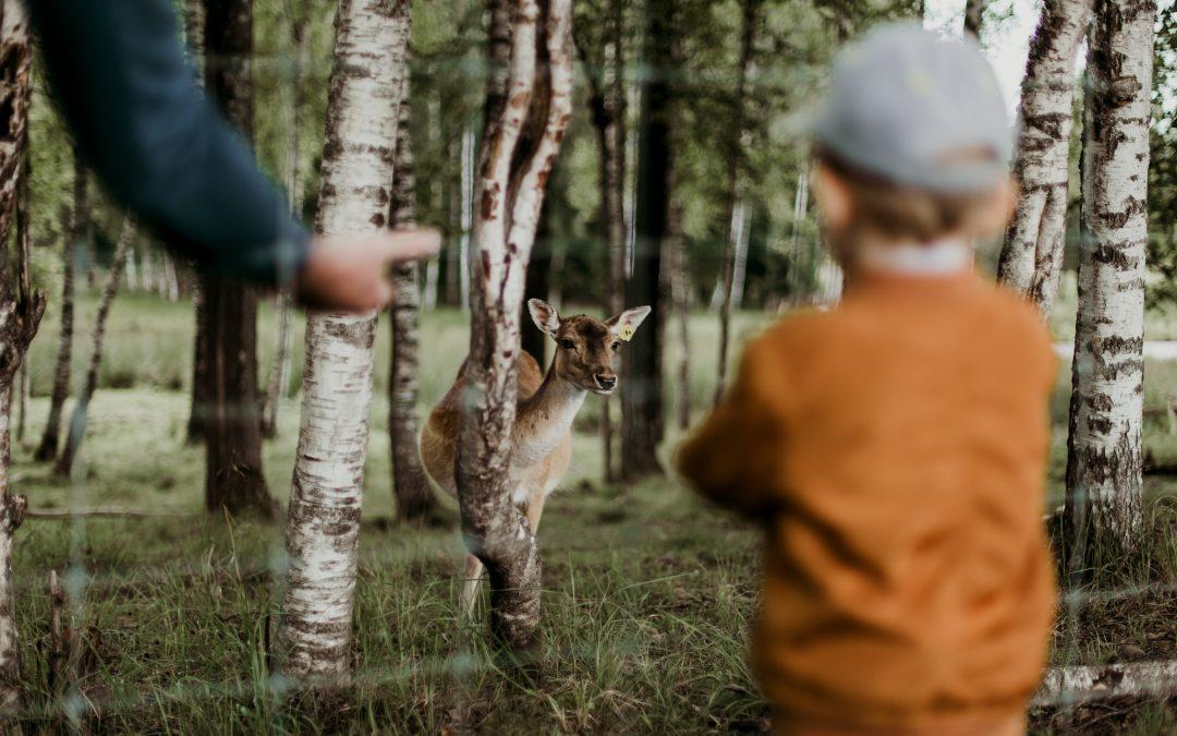 7 lugares respetuosos para ver animales con niños en Madrid